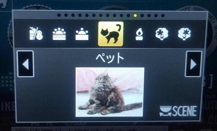 デジタル一眼レフカメラD5500の「ペットモード」が便利だったお話(=゚ω゚)ノ