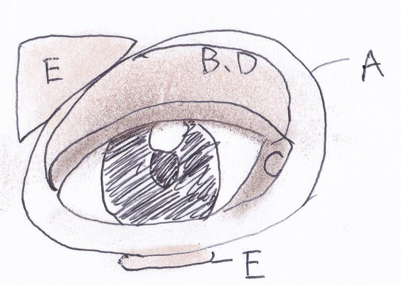 ケイト ブラウンシェードアイズN #BR-4を目に塗ってみた図